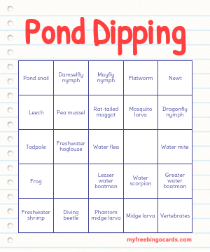 Pond Dipping Bingo